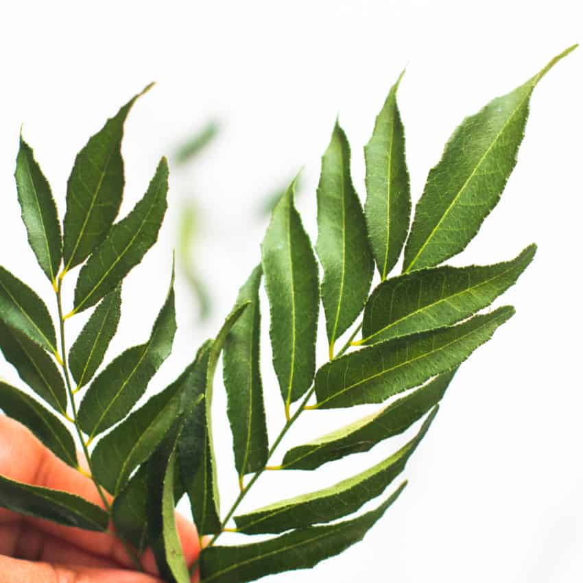 sprigs of curry leaves
