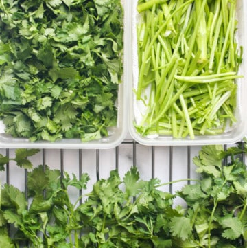 fresh cilantro and stems