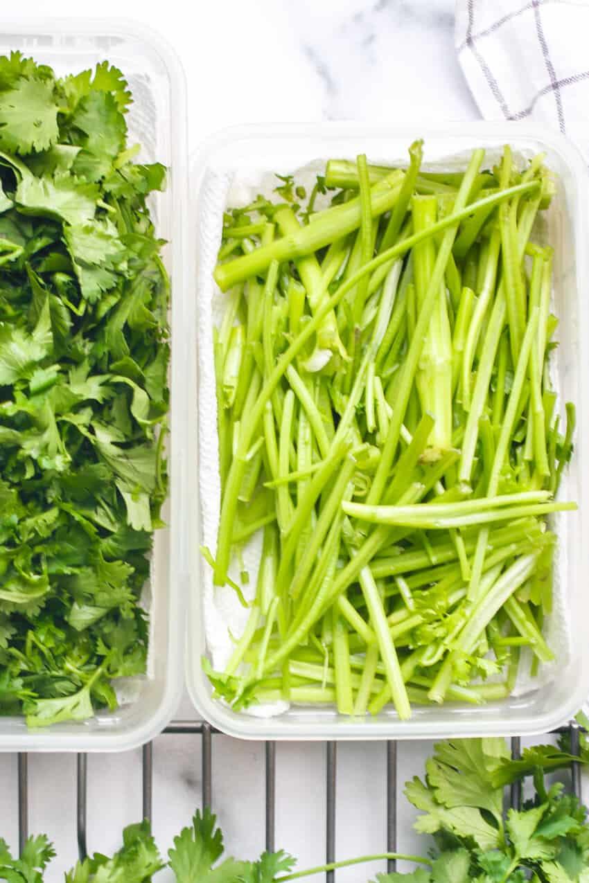 cilantro stems